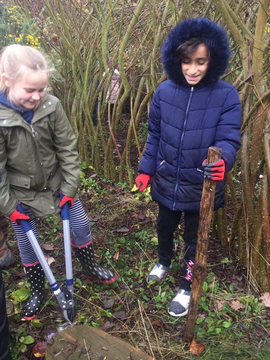 Tree Planting 3