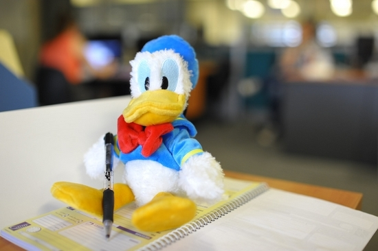 Duck (8)