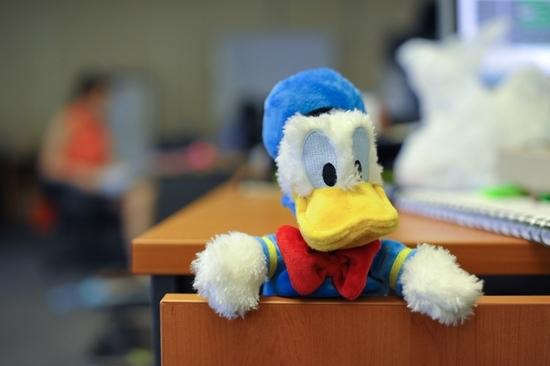 Duck (11)