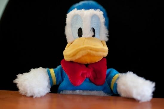 Duck (21)