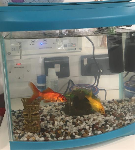 Fish Tank 3